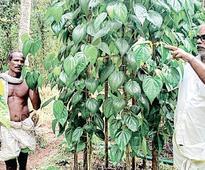Rising Indo-Pak tension has a paan Kerala Impact