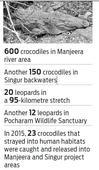Crocodiles, leopards near Manjeera give sleepless nights to people