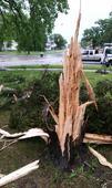 Winnipeg tree explodes from lightning strike