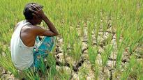 Maharashtra government has no record of district-wise farm loan waiver disbursement