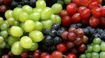 Anantapur: Quality Indian grapes needed to brew wine
