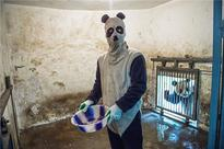 National Geographic photographers don hilarious panda costumes to document wildlife 'training'
