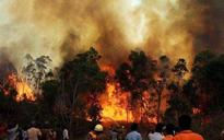 Uttarakhand forest fire: 7 dead, 2269 hectares of green cover destroyed; Rajnath reviews situation