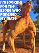 David Campbell in no doubt zoo keeper should be sacked for punching kangaroo