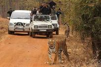 More than 30 lakh tourists visited Nagpur jungles in the past one year