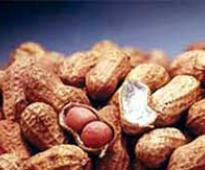 K'taka asks Centre to procure groundnut as prices crash below MSP