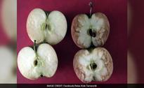 Offbeat: Teacher Used Apples to Explain How Bad Bullying is. Her Post is Now Viral
