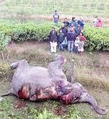 5 elephants mowed down by train near Balipara