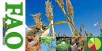 FAO Food Price Index Records Modest Decline In July