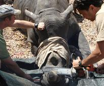 Swaziland is trying to sell 330 kg of rhino horn to pay for conservation initiatives