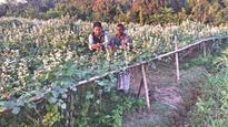 Changing life through bean farming