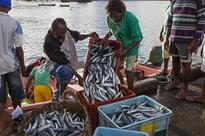 Caribbean Regional Fisheries Mechanism successfully implements sanitary controls project