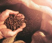 Govt seeks GI certification to protect Araku Coffee's unique identity
