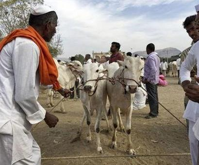 NDA MP: 'The farmer is extremely furious'