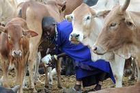 [ 22nd November 2016 ] Processed Milk, Yoghurt and Milk Powder Dominate the Africa Dairy Product Market by Revenue Food