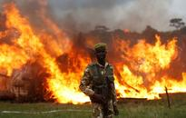 Watch: Eleven pyres burn as Kenya torches its ivory stockpile