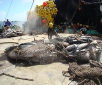 UN to vote on World Tuna Day