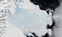 Rapid growth in Larsen C ice shelf's already huge crack may soon destabilise Antarctic's largest structure