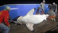 Great White Shark Katharine Tracked Approaching Florida After Nearly 29,000-mile Journey