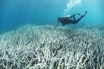 Large parts of Barrier Reef could be dead in 20 years: scientists