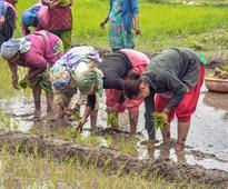 Agri related stocks rally;Chambal Fertilisers, Shakti Pumps hit 52-wk highs