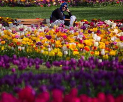 Sight to behold: 30 million tulips blossom in Istanbul!