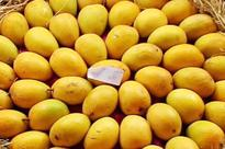 Lucknow: Mango named after Delhi braveheart