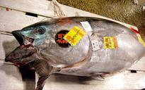 Call for two year ban on fishing for Pacific bluefin