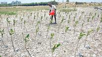 Adyar Creek to Get 40-Acre Mangrove Cover