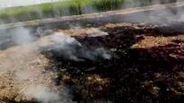 NGT wants govts to explain next plan to curb stubble burning