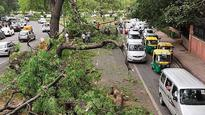 Trees uprooted in Sunday downpour choke city traffic