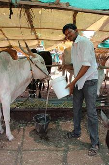 The plight of farmers in drought-affected Beed