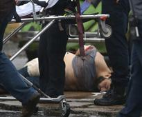 NY Bombing Suspect Passed Background Check for Gun Used to Shoot Police