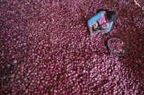 Onion prices plunge to Rs 5!