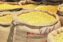 Rs 475 per quintal hike recommended for pulses MSP in rabi season