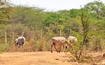 Protecting nature: Centre notifies buffer zone for Delhi part of Asola Bhatti sanctuary