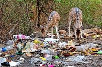 Plastic menace running wild in Borivali national park