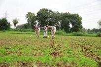 Pavana dam-hit farmers demand rehabilitation by year-end