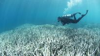 Great Barrier Reef 'stuffed with a capital S' if we don't act: chief scientist
