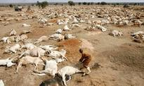 Thunder kills 21 cows in Nasarawa