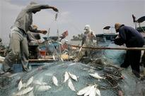 Bengal eyes fishery as sunrise sector