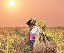 Anticipating normal monsoon, Odisha sets 10 mn tonne food grains target