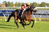 Daily Preview: Listed Grafton Cup