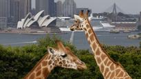 A better Taronga Zoo for all: but who pays?