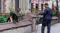 Longtime Boston Police K9 dies after sudden illness