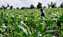 Agric revolution: Lessons from the Chinese experience