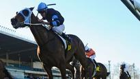 Preview of Dato' Tan Chin Nam Stakes day at Moonee Valley