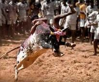 Jallikattu: Police are treating Alanganallur as an undeclared war zone, Stalin says