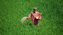 Some assurance: How new crop insurance scheme can be a game-changer