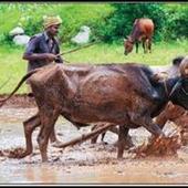 Loan waiver promise brings little cheer to Tiruvarur farmers